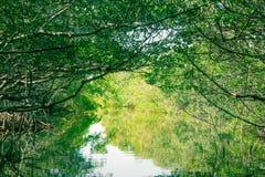 Eco-Tourism mangroves everglades royalty free stock photography