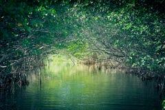 Eco-Tourism mangroves everglades. Eco-tourism image of Mangroves in Everglades National Park in Florida USA stock photos