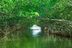 Eco-Tourism mangroves everglades. Eco-tourism image of Mangroves in Everglades National Park in Florida USA royalty free stock photo
