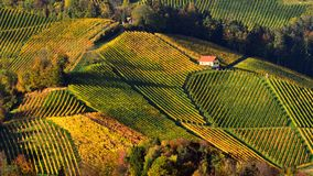 Slovenia vineyard patterns in autumn time. Eco tourism in Slovenia vineyard patterns in autumn time at sunset royalty free stock images