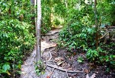 Eco-Tourism - Trekking through Evergreen Tropical Rain Forest - Elephant Beach, Havelock Island, Andaman Islands, India stock photography