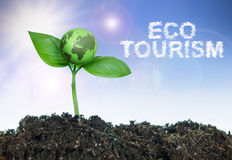 Eco tourism. Word cloud next to a small green world growing from a seedling royalty free stock images
