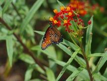 Eco trädgård av ledar- Gardners Royaltyfria Bilder