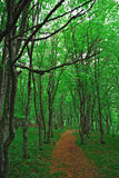 Eco trail Stock Image