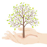 Eco Tree Royalty Free Stock Images