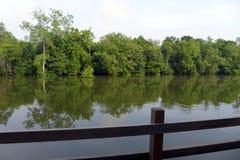 Eco turism - tillgripa balkongen med tropisk flodsikt Arkivfoto