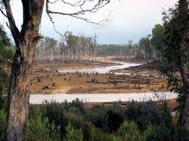 Eco-vandalisme in Tasmaanse bossen Royalty-vrije Stock Afbeelding