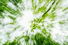Eco verde astratto, fondo di ecologia dell'albero Moto blured velocità dello zoom Creato zumando fotografia stock
