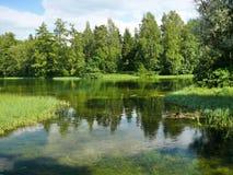 Eco-Vida verde Fotografia de Stock Royalty Free