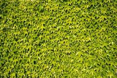 Eco-Wanddekor mit Grünpflanzen Stockfoto