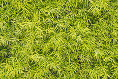 Eco-Wanddekor mit Grünpflanzen Lizenzfreie Stockfotografie