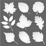 Eco white cut paper leaves collection. Vector illustration. Origami white cut paper leaves collection. Vector illustration stock illustration