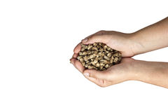 Eco wood pellet Stock Image