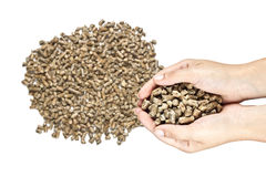 Eco wood pellet Stock Photos