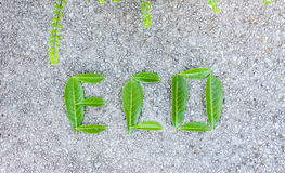 Eco word composed of green leaves Royalty Free Stock Photography