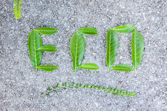 Eco word composed of green leaves Royalty Free Stock Photos