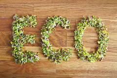 Eco word made of organic sprouts Royalty Free Stock Photos