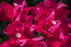 Eco - Życzliwa rośliny grupa Obraz Stock