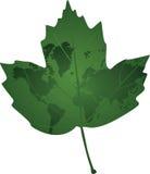 eco zielony odosobniony liść foki kształta znaka wosku biel Zdjęcia Stock