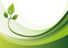 Ecoachtergrond en bladeren van de aard Royalty-vrije Stock Foto