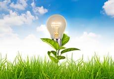 Ecoconcept - de gloeilamp groeit in het gras tegen Stock Foto