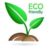 Ecoconcept - groene jonge spruit Stock Foto's
