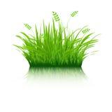 ecogräs vektor illustrationer