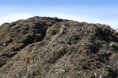 Ecológicos al aire libre de la montaña grande del estiércol vegetal reciclan Fotografía de archivo libre de regalías