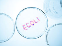 Ecoli bacteria Stock Photos
