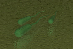 Ecoli-Bakterien Stockfotos