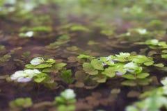 Ecolife在河阿尔及利亚,非洲 免版税库存照片