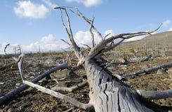 Ecología Imagen de archivo libre de regalías