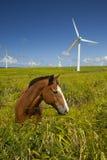 Ecología verde, turbinas de viento y caballo Foto de archivo