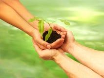 Ecologia Imagem de Stock