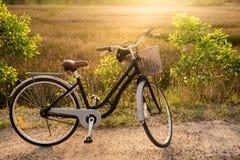 Ecologia che viaggia in bici, ciclante in natura Parcheggio della bicicletta dentro immagini stock libere da diritti