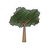 Ecologia da natureza da árvore Fotografia de Stock Royalty Free
