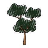 Ecologia da natureza da árvore Imagens de Stock Royalty Free