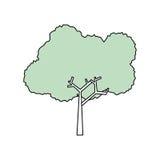 Ecologia da natureza da árvore Foto de Stock