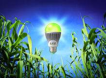 Ecologia di crescita - lampada principale - illuminazione verde fotografia stock libera da diritti