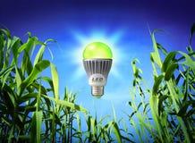 Ecologia do crescimento - lâmpada conduzida - iluminação verde fotografia de stock royalty free