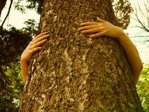 Ecologia e árvore Fotografia de Stock Royalty Free