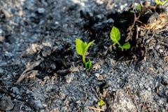 Ecologia e crescita dell'albero dell'ambiente nell'area della foresta quello fotografia stock libera da diritti