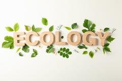 Ecologia e pianta dell'iscrizione su fondo leggero, spazio per testo Protezione dell'ambiente fotografia stock