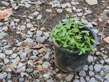 Ecologia, Giornata mondiale dell'ambiente, Eco amichevole, fiducia Fotografia Stock Libera da Diritti