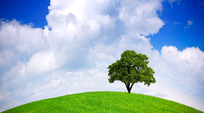 Ecologia globale Immagini Stock Libere da Diritti
