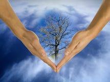 Ecologia, mani, responsabilità, commercio Fotografie Stock