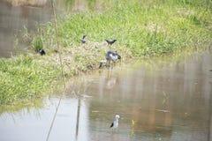 Ecologia naturale degli uccelli Immagine Stock