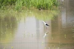 Ecologia naturale degli uccelli Immagini Stock