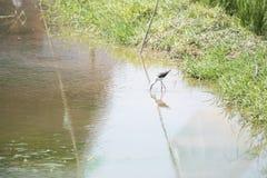 Ecologia naturale degli uccelli Immagini Stock Libere da Diritti