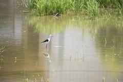 Ecologia naturale degli uccelli Fotografia Stock
